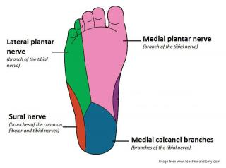 foot sole nerve diagram